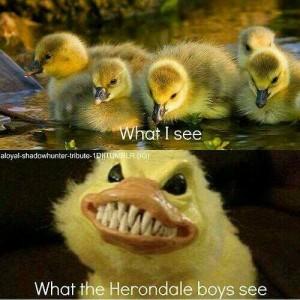 Herondales and Ducks 5